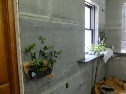 Planting ivy in bread pans along the wall. A great idea ---> didn't work out. :(