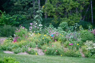 Tall sunflower, cleome, cosmos, zinnias and calendula