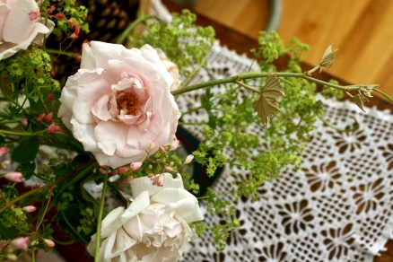 Rosa 'New Dawn' with Alchemilla and Vitis