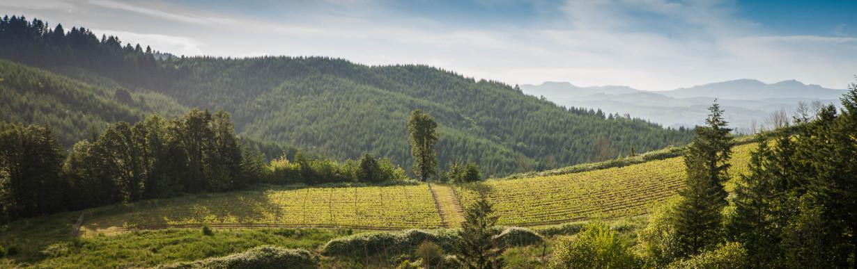 La Boheme Vineyard