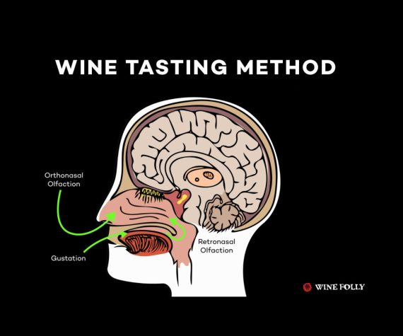 Wine Tasting Method Olfaction Wine Folly
