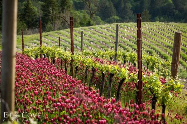 Roosevelt Vineyard in the springtime