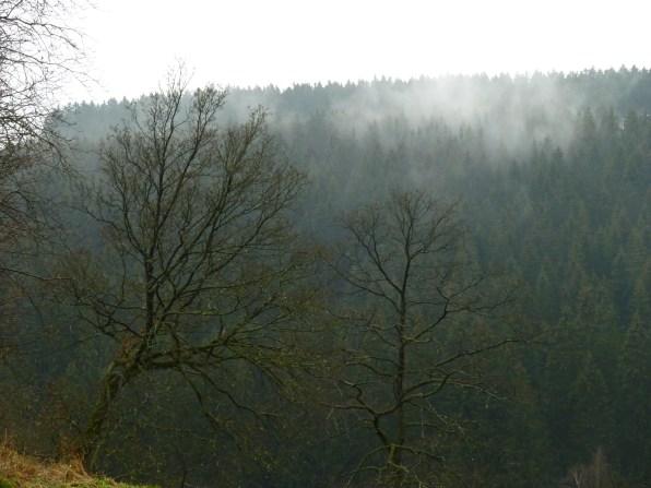 Monschau, Höfen_0295