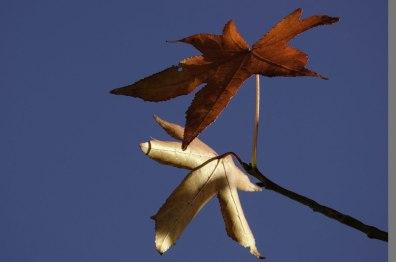 Blätter-im-Blau2