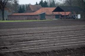 Saprgelfelder und Hof