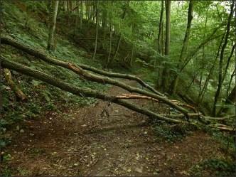 Waldschluchtenpfad (55)