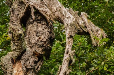 Auch die Baumgeister zeigen sich heute