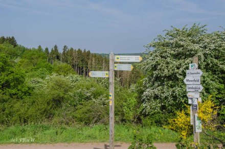 Thumbnail for Ginsterblüte in der Vulkaneifel - Landesblick - Wolfsschlucht - Windsbornkrater