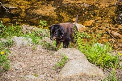 Urlaub Harz 2015_0415