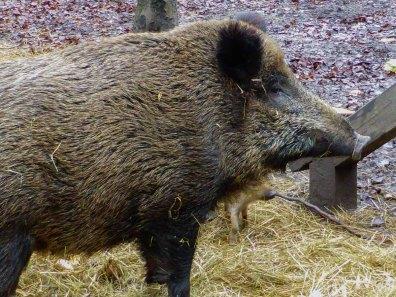 Wildpark_HoehenfelderSee_DellbrueckerHeide (86)