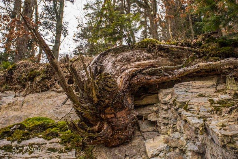 Traumschleife_Altlayer Schweiz (16)