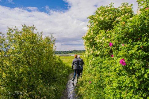 BesenwagenBloggerwandernWesterwald (338)