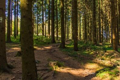 fuchskaute_erlebnisschleife_westerwald-263