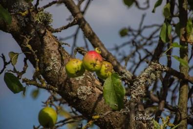 wacholder_ginster_-pilgerpfade-bei-st_-jost-246