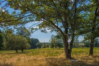 wacholder_ginster_-pilgerpfade-bei-st_-jost-74