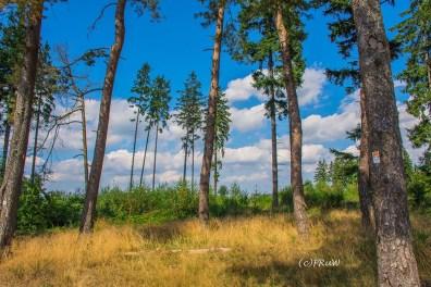 wacholder_ginster_-pilgerpfade-bei-st_-jost-95