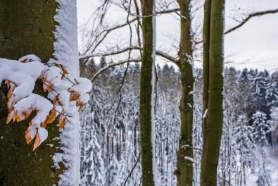 bergischerstreifzugwacholderweg-92