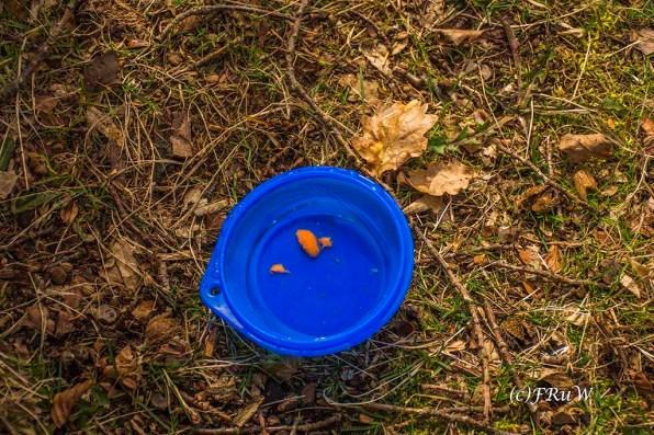 Werfe Futter in die Wasserschüssel und Hund trinkt