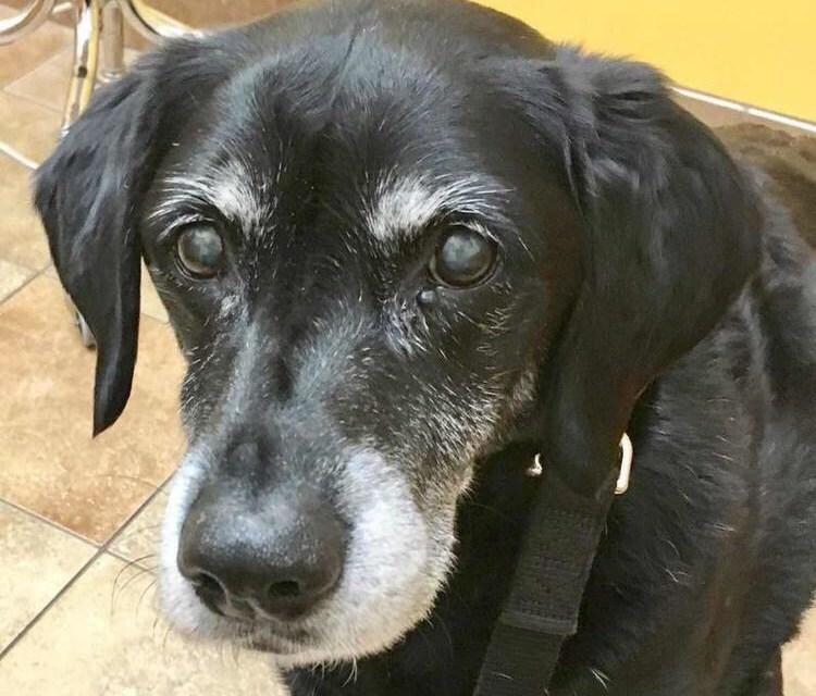 LOST DOG: Help Find Goalie