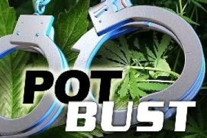 Five Men Arrested In Illegal Growing Operation