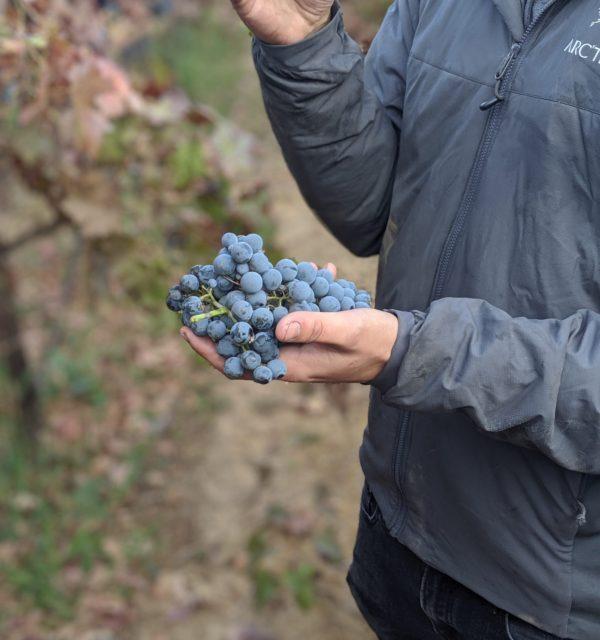 Elk Grove's Newest Winery – Christopher Cellars