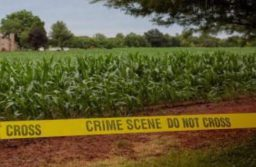 Male Body Found At Galt Dairy Farm