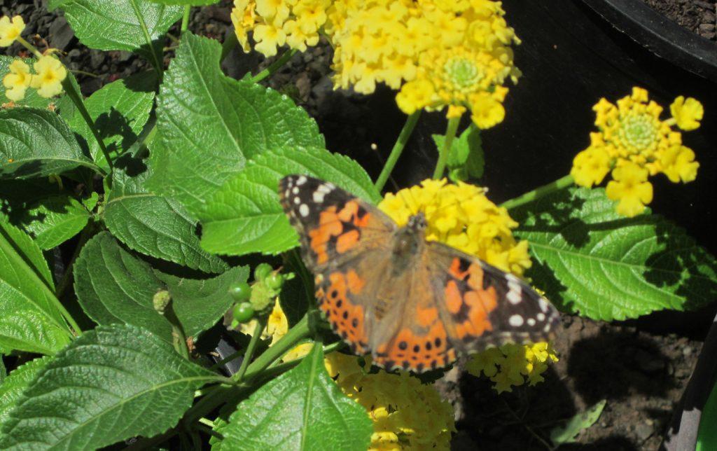 Butterfly Pavilion Elkton Community Education Center