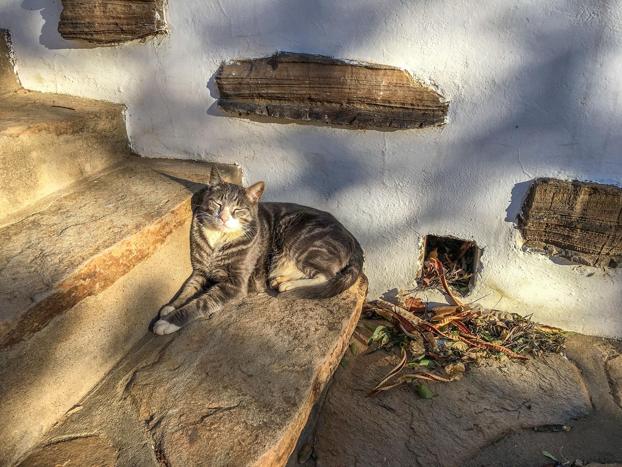 Cat at Trans-Kalahari Inn, Windhoek, Namibia, Africa