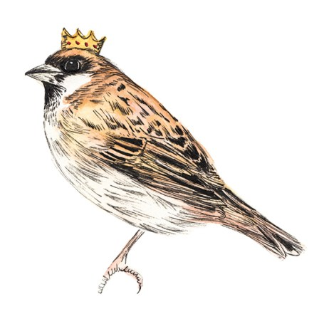 Private logo commission. Crowned Sparrow