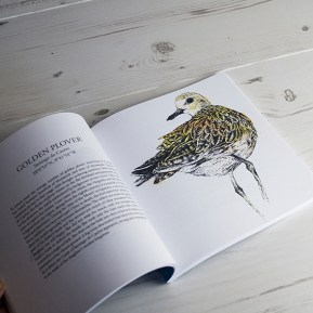 Golden Plover illustration, The Migrant Waders, Published by Dunlin Press