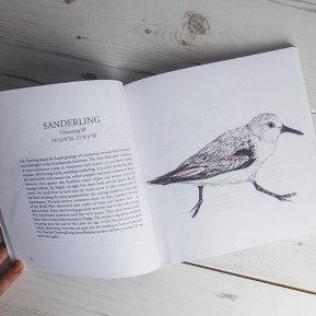 Sanderling illustration, The Migrant Waders, Published by Dunlin Press