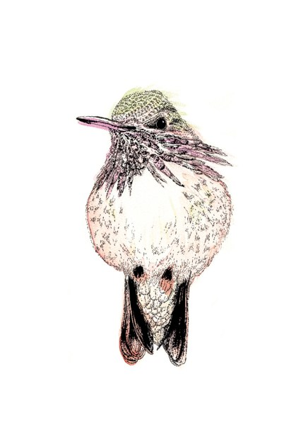 Hummingbird watercolour and ink. Album cover illustration for Five Mile Float