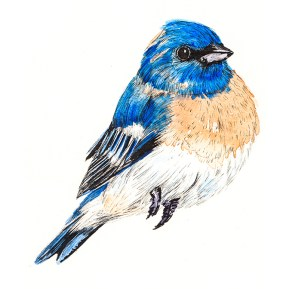 Lazuli bunting (c) Ella Johnston Private Commission