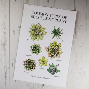 Illustrated Guide to Succulents (Private commission).