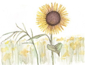 Sunflower field, illustration (c) Ella Johnston, Brittany Ferries, Guardian Labs 2017