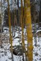 Orange lichen - Oranžový lišejník