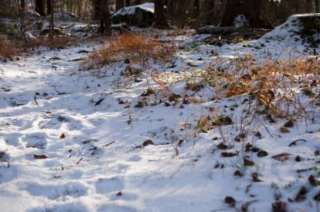 Small path in a forest - Malá pěšinka v lese