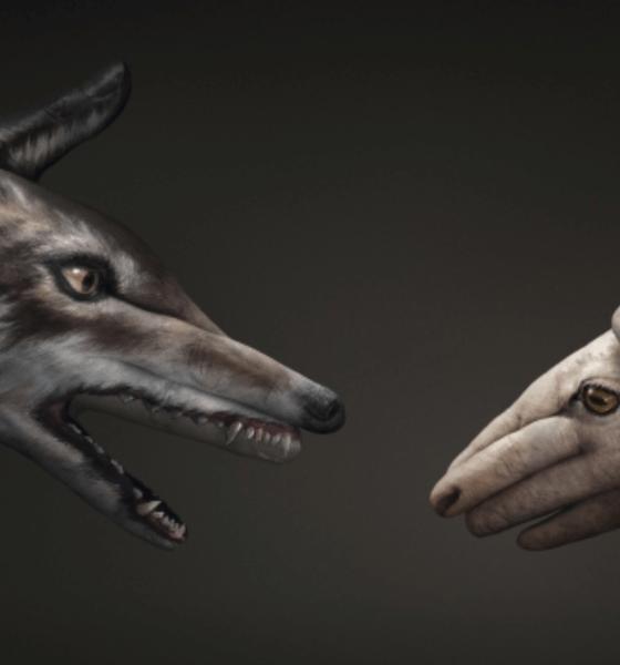 Cuba Lobo con piel de oveja - El Latinaso