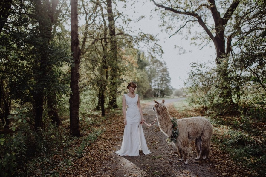 Alpaca Love Boho Wedding