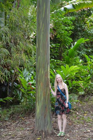 I particularly loved the rainbow eucalyptus...