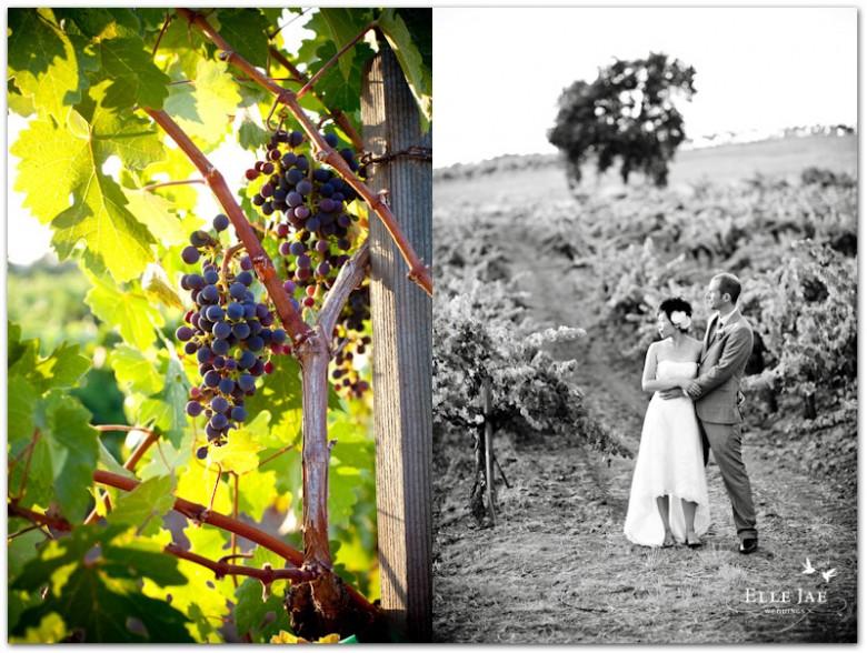 BR Cohn Wine Country wedding
