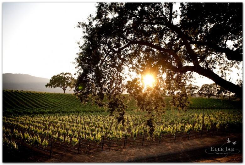 BR Cohn Winery