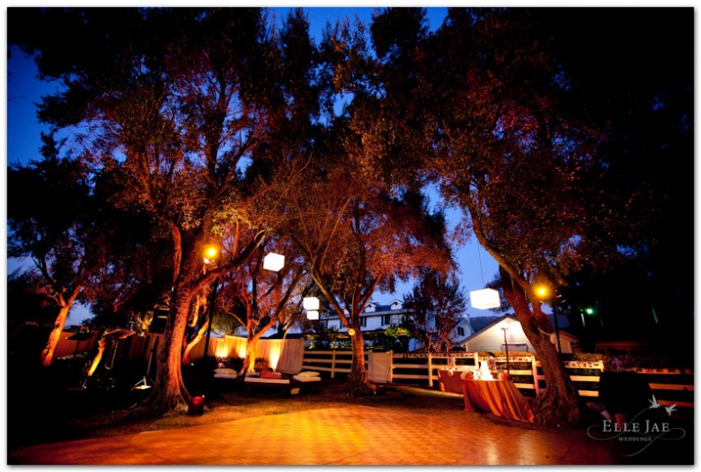 BR Cohn olive grove at night