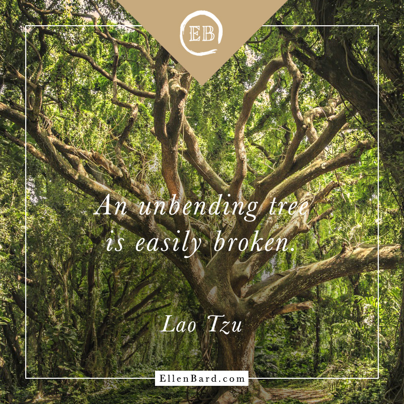 Quote-Lao-Tzu-tree