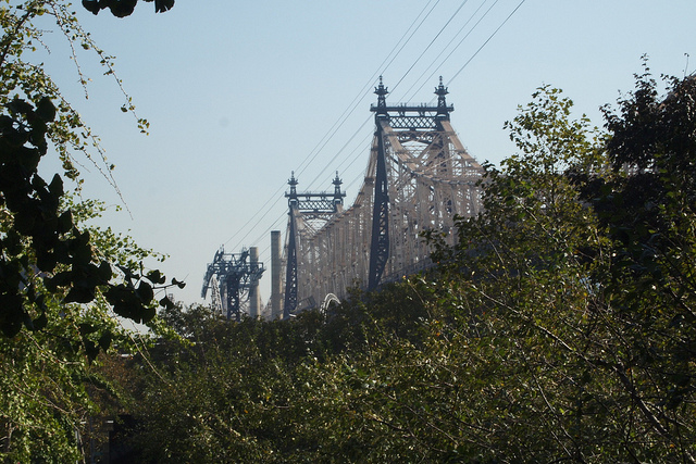 Tram and Bridge Crowded by Trees