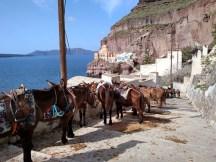 The Famous Santorini Donkeys