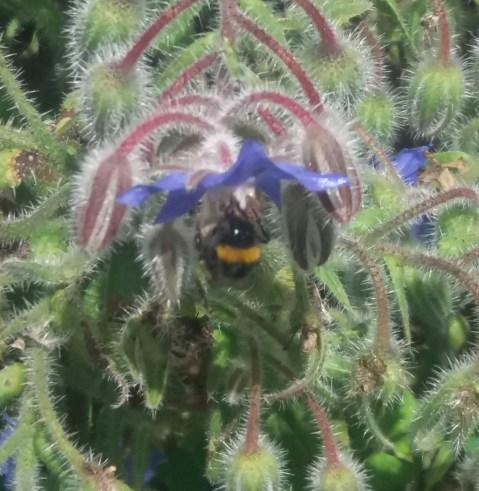 Beesin your healing garden