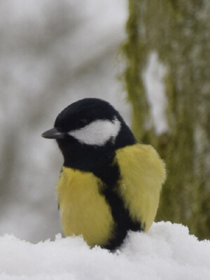 Ensom og trist fugl
