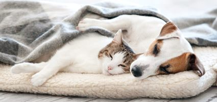 Sov godt