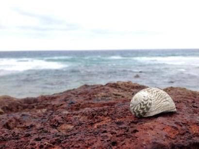 shell#1